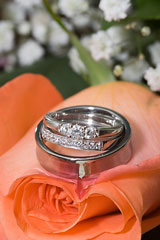 titanium wedding rings on a rose